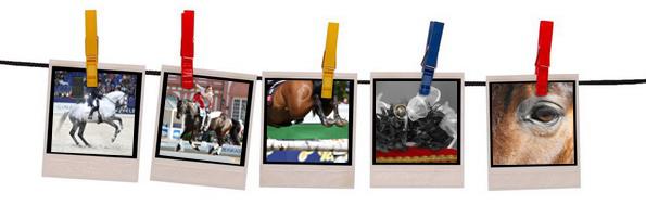 Fotoservice beinhaltet Bildabzuege auf Fotopapier, CD oder per Mail