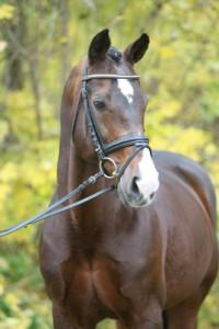 Pferdeportrait - Pferde im Stand fotografieren