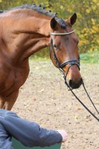 Pferde im Stand fotografiert
