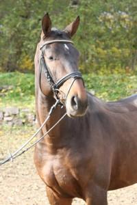 Pferde im Stand fotografieren