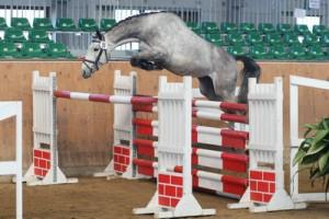 Freispringen 2011 - Vierjährige Reitpferde